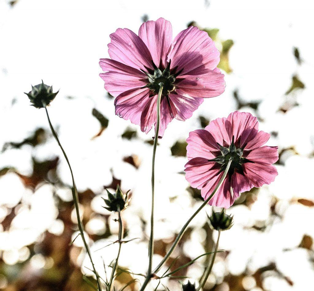 billede af blomster